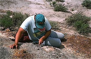 Figure 19. Johnathan Campbell collecting a Plastomenus carapace from the Sentinel Butte Formation, North Unit.
