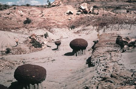 Two-foot diameter concretions from the Bullion