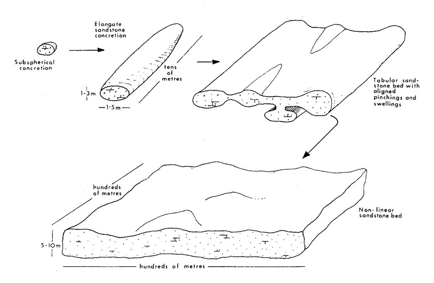 Sequence of forms developed by continued sandstone concretion growth. All four types, with many intermediate shapes, are present in south-western North Dakota. From Parsons (1980).